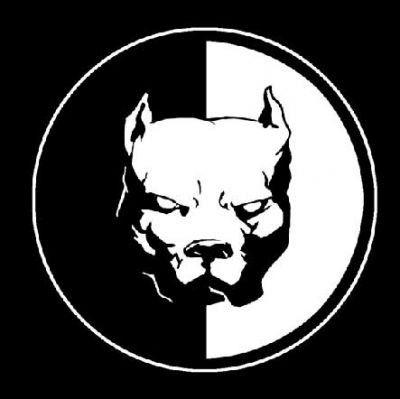 dogue argentin noir